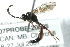 (Ichneumonidae sp. MAS BIN290 - 07PROBE-20825)  @12 [ ] CreativeCommons - Attribution Non-Commercial Share-Alike (2009) Unspecified Biodiversity Institute of Ontario