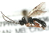 (Ichneumonidae sp. MAS BIN300 - 07PROBE-20836)  @11 [ ] CreativeCommons - Attribution Non-Commercial Share-Alike (2009) Unspecified Biodiversity Institute of Ontario