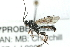 (Ichneumonidae sp. MAS BIN491 - 07PROBE-20928)  @13 [ ] CreativeCommons - Attribution Non-Commercial Share-Alike (2009) Unspecified Biodiversity Institute of Ontario