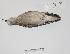 "( - MACN-Or-cp 56)  @13 [ ] Copyright (2012) MACN Museo Argentino de Ciencias Naturales ""Bernardino Rivadavia"""