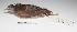 "(Crypturellus - MACN-Or-cp 77)  @13 [ ] Copyright (2012) MACN Museo Argentino de Ciencias Naturales ""Bernardino Rivadavia"""
