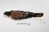 "(Falco sparverius - MACN-Or-ct 1040)  @13 [ ] Copyright (2012) MACN Museo Argentino de Ciencias Naturales ""Bernardino Rivadavia"""