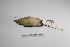 "( - MACN-Or-ct 1118)  @12 [ ] Copyright (2012) MACN Museo Argentino de Ciencias Naturales ""Bernardino Rivadavia"""