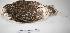 "(Athene cunicularia - MACN-Or-ct 1381)  @13 [ ] Copyright (2012) MACN Museo Argentino de Ciencias Naturales ""Bernardino Rivadavia"""