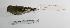 "(Carduelis magellanica - MACN-Or-ct 1491)  @13 [ ] Copyright (2012) MACN Museo Argentino de Ciencias Naturales ""Bernardino Rivadavia"""