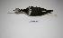 "(Himantopus melanurus - MACN-Or-ct 1580)  @13 [ ] Copyright (2012) MACN Museo Argentino de Ciencias Naturales ""Bernardino Rivadavia"""