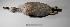 "(Callonetta - MACN-Or-ct 1756)  @14 [ ] Copyright (2012) MACN Museo Argentino de Ciencias Naturales ""Bernardino Rivadavia"""