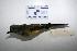"( - MACN-Or-ct 1774)  @13 [ ] Copyright (2012) MACN Museo Argentino de Ciencias Naturales ""Bernardino Rivadavia"""