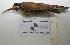 "(Lepidocolaptes - MACN-Or-ct 2136)  @13 [ ] Copyright (2012) MACN Museo Argentino de Ciencias Naturales ""Bernardino Rivadavia"""