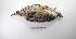 "(Tinamiformes - MACN-Or-ct 2745)  @15 [ ] Copyright (2012) MACN Museo Argentino de Ciencias Naturales ""Bernardino Rivadavia"""