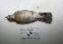 "( - MACN-Or-ct 3190)  @13 [ ] Copyright (2012) MACN Museo Argentino de Ciencias Naturales ""Bernardino Rivadavia"""