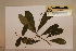 (Medicosma - CNS_CC_x01_D6)  @11 [ ] Copyright (2010) Australia Tropical Herbarium CSIRO, Queensland Government and James Cook University