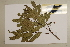 (Mischarytera - CNS_CC_6077_E5)  @13 [ ] Copyright (2010) Australia Tropical Herbarium CSIRO, Queensland Government and James Cook University