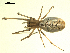 (Tetragnathidae - CCDB-05302-C10)  @14 [ ] CreativeCommons - Attribution Non-Commercial Share-Alike  Gergin Blagoev, Biodiversity Intitute of Ontario Biodiversity Institute of Ontario