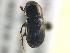 (Ataenius spretulus - BIOUG02062-C07)  @13 [ ] CreativeCommons - Attribution Non-Commercial Share-Alike (2012) BIO Photography Group Biodiversity Institute of Ontario
