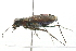 (Cicindela - 09BBECO-0274)  @16 [ ] CreativeCommons - Attribution Non-Commercial Share-Alike (2010) Unspecified Biodiversity Institute of Ontario