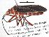 (Pyrrhocoridae - BIOUG02211-H07)  @16 [ ] CreativeCommons - Attribution Non-Commercial Share-Alike (2013) BIO Photography Group Biodiversity Institute of Ontario