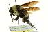 (Bombus fraternus - BIOUG02462-G01)  @14 [ ] CreativeCommons - Attribution Non-Commercial Share-Alike (2013) BIO Photography Group Biodiversity Institute of Ontario