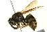 (Dolichovespula alpicola - BIOUG02974-F08)  @14 [ ] CreativeCommons - Attribution Non-Commercial Share-Alike (2012) CNC/BIO Photography Group Biodiversity Institute of Ontario