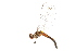 ( - 09BBODO-047)  @13 [ ] CreativeCommons - Attribution Non-Commercial Share-Alike (2009) Unspecified Biodiversity Institute of Ontario