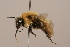 (Bombus amurensis - B3262-D02-CHN)  @16 [ ] Unspecified (default): All Rights Reserved  Unspecified Unspecified