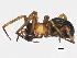 (Metaltella - BIOUG01880-G04)  @13 [ ] CreativeCommons - Attribution Non-Commercial Share-Alike (2012) BIO Photography Group Biodiversity Institute of Ontario