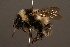 (Bombus personatus - 1283-CHN)  @15 [ ] Unspecified (default): All Rights Reserved  Unspecified Unspecified