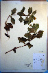  (Borrichia - CCDB-18321-G9)  @13 [ ] CreativeCommons - Attribution Non-Commercial Share-Alike (2012) Biodiversity Institute of ontario Unspecified