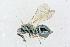 (Tetracampidae - BC-ZSM-HYM-21585-F05)  @15 [ ] CreativeCommons - Attribution Non-Commercial Share-Alike (2014) Stefan Schmidt ZSM (Zoologische Staatssammlung Muenchen)