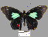 (Parides sesostris tarquinius - YB-BCI14795)  @14 [ ] No Rights Reserved  Unspecified Unspecified