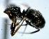 (Camponotus sp. 1 - DAF0104)  @13 [ ] Creative Commons (2013) David A. Donoso UTPL
