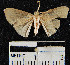 (Geometridae_incertae_sedis - YB-BCI13926)  @13 [ ] No Rights Reserved  Unspecified Unspecified