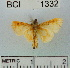 (Noctuidae sp. 6YB - YB-BCI1332)  @13 [ ] No Rights Reserved  Unspecified Unspecified
