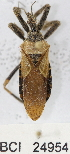  (Reduviidae sp.2YB - YB-BCI24954)  @12 [ ] No Rights Reserved  Unspecified Unspecified