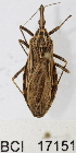  (Reduviidae sp.7YB - YB-BCI17151)  @13 [ ] No Rights Reserved  Unspecified Unspecified