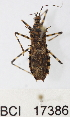  (Reduviidae sp.9YB - YB-BCI17386)  @11 [ ] No Rights Reserved  Unspecified Unspecified