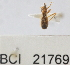 (Reduviidae sp.12YB - YB-BCI21769)  @11 [ ] No Rights Reserved  Unspecified Unspecified