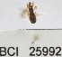 (Reduviidae sp.12YB - YB-BCI25992)  @11 [ ] No Rights Reserved  Unspecified Unspecified