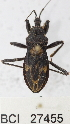 (Reduviidae sp.20YB - YB-BCI27455)  @12 [ ] No Rights Reserved  Unspecified Unspecified