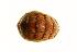 (Tonicella undocaerulea - 10BCMOL-00071)  @14 [ ] Unspecified (default): All Rights Reserved  Unspecified Unspecified