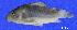 ( - LBPV 61827)  @12 [ ] CreativeCommons - Attribution (2013) Claudio de Oliveira Laboratório de Biologia e Genética de Peixes - UNESP - Botucatu