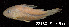 ( - LBPV 28180)  @11 [ ] CreativeCommons - Attribution (2013) Claudio de Oliveira Laboratório de Biologia e Genética de Peixes - UNESP - Botucatu