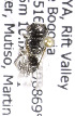 (Wainia - CCDB-15282 B11)  @13 [ ] CreativeCommons - Attribution Non-Commercial Share-Alike (2011) Packer Collection York University York University
