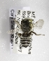  (Megachile sabinensis - CCDB-09863 G11)  @11 [ ] Unspecified (default): All Rights Reserved (2011) Unspecified York University
