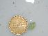 (Acetabularia crenulata - BDA0217)  @11 [ ] Unspecified (default): All Rights Reserved  Unspecified Unspecified