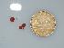 (Botryocladia bermudana - BDA0028)  @12 [ ] Unspecified (default): All Rights Reserved  Unspecified Unspecified