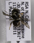 (Afranthidium haplogastrum - CCDB-15278 A07)  @13 [ ] CreativeCommons - Attribution Non-Commercial Share-Alike (2011) Packer Collection York University York University