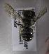 (Afranthidium tergofasciatum - CCDB-15281 E04)  @13 [ ] CreativeCommons - Attribution Non-Commercial Share-Alike (2011) Packer Collection York University York University