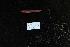 (Ctenotrypauchen - DHS0356)  @13 [ ] Copyright (2006) D. Hinsinger/Santo2006/MNHN MNHN