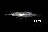 (Mystus sp - BIF0794)  @11 [ ] CreativeCommons - Attribution Non-Commercial Share-Alike (2014) Nicolas HUBERT IRD